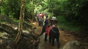 Unrecognizable people riding elephants. In jungle stock footage