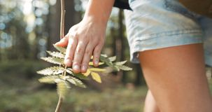 Close up of woman`s hand touching plant on green nature background. Royalty Free Stock Photos