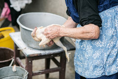 Unrecognizable senior woman cleaning freshly slaughtered chicken. Unrecognizable senior woman cleaning and washing freshly slaughtered chicken outside in front Royalty Free Stock Image