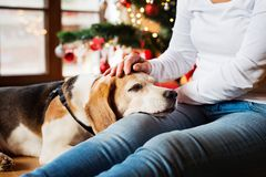 Unrecognizable senior woman with her dog at Christmas tree. Unrecognizable senior woman sitting on the floor in front of Christmas tree with her dog, resting Stock Photos