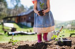 Free Unrecognizable Small Girl With Strawberry Plant In Garden, Sustainable Lifestyle Concept. Royalty Free Stock Photos - 194402968