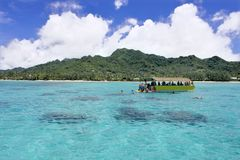 Unrecognizable tourist snorkelling in Rarotonga lagoon Cook Islands. Unrecognizable tourist snorkeling in Rarotonga lagoon, Cook Islands.Most of the island is royalty free stock images