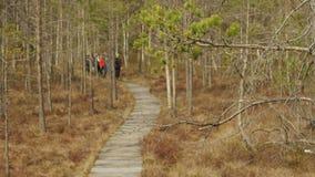 Tourists walk on boardwalk through marsh wetlands. Unrecognizable Tourists walk on boardwalk through marsh wetlands stock video footage