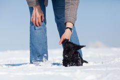Woman strokes her puppy in the snow Royalty Free Stock Photo