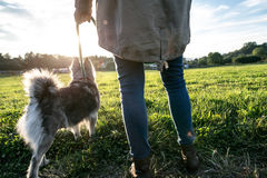 Unrecognizable young woman with dog in green sunny nature Royalty Free Stock Photography