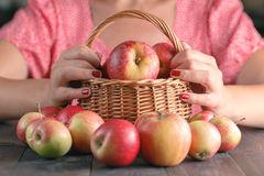 Unrecognizable young woman in red shirt harvesting apples Royalty Free Stock Photo