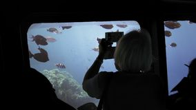 An unrecognized silhouette of tourists on an underwater ship is studying, viewing and photographing a flock of colorful stock video footage