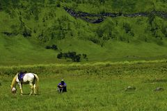 Free Unreconized People. Scenic Green Grass Field View Of Rolling Countryside Green Farm Fields With Horse Stock Photo - 143697680