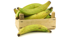 Unripe baking bananas (plantain bananas) Royalty Free Stock Photos