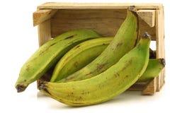 Unripe baking bananas (plantain bananas) Royalty Free Stock Images