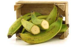 Unripe baking bananas (plantain bananas) Stock Photos