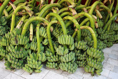 Unripe banana heap Royalty Free Stock Photo