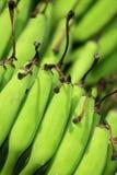 Unripe bananas Stock Photos