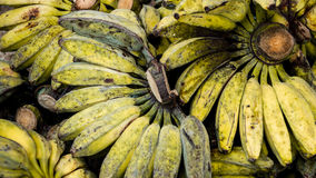 Unripe Cardava green and yellow Bananas for Sale Royalty Free Stock Photo