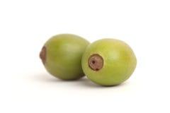 Unripe coffee fruits isolated on white background Royalty Free Stock Photo