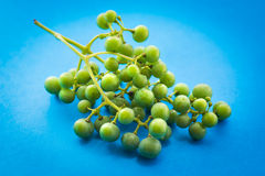Unripe green grapes. Royalty Free Stock Images