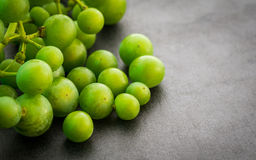 Unripe green grapes. Royalty Free Stock Photo