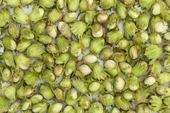 Unripe green hazelnuts Royalty Free Stock Photo