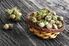 Unripe hazelnuts. Left to dry Stock Photography