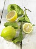 Unripe lemons Stock Images