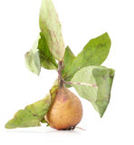 Unripe medlar with leaf on white background Stock Photography
