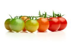 unripe mogna tomater för Cherry arkivbild