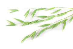 Unripe oat spike isolated on white background.  Royalty Free Stock Photos