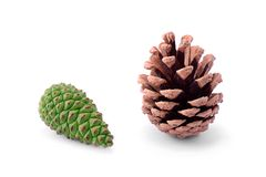 Unripe pine cone  on a white Royalty Free Stock Photography