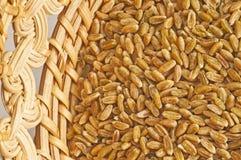 Unripe spelt grain Stock Photography