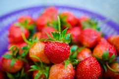 Unripe strawberry Royalty Free Stock Photos
