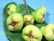 Unripe water apple fruits Stock Images