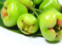 Unripe water apple fruits Stock Photo