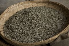 Unripened green coffee beans Stock Photos