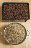 Unroasted фасоли cofffee и зажаренный в духовке Стоковые Фото