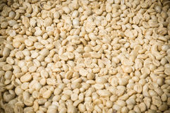Unroasted coffee bean Royalty Free Stock Image