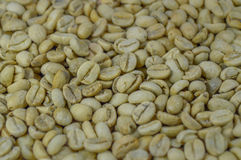 Unroasted coffee beans background, close-up. Royalty Free Stock Image