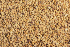 Unroasted coffee beans. Background. Unroasted coffee beans covering the entire picture Stock Photography