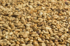 Unroasted coffee beans. Background. Unroasted coffee beans covering the entire picture Royalty Free Stock Photo