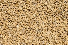 Unroasted coffee beans background in market, Bali, Indonesia. Royalty Free Stock Photos