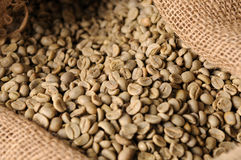 Unroasted coffee beans Royalty Free Stock Photo
