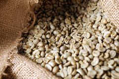 Unroasted coffee beans Royalty Free Stock Photos