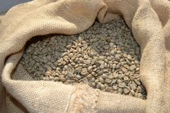 Unroasted dry green coffee beans in a burlap sack under the direct sunlight. Unroasted dry green coffee beans in a burlap sack of rough canvas under the direct stock photos