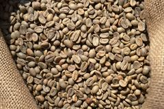 Unroasted dry green coffee beans in a burlap sack under the direct sunlight. Unroasted dry green coffee beans in a burlap sack of rough canvas under the direct royalty free stock photos
