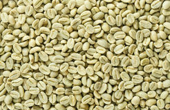 Unroasted green Arabica coffee beans flat surface Royalty Free Stock Images