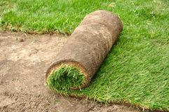 Unrolling Sod. For a New Lawn Stock Image