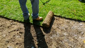 Unrolling Sod for a New Lawn. Unrolling Sod with fresh natural roll green lawn grass installation garden turf soil new laying landscaping installing dirt stock images