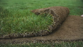 Unrolling Sod for a New Lawn. Turf stock video