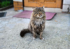 Unruffled wild cat Stock Images