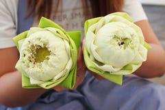 Lotus Fotos de Stock
