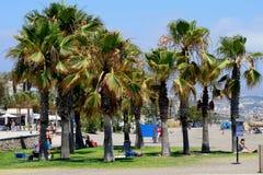 Uns oásis do lado da praia Foto de Stock Royalty Free